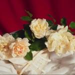 Открытки к 8 Марта Цветы