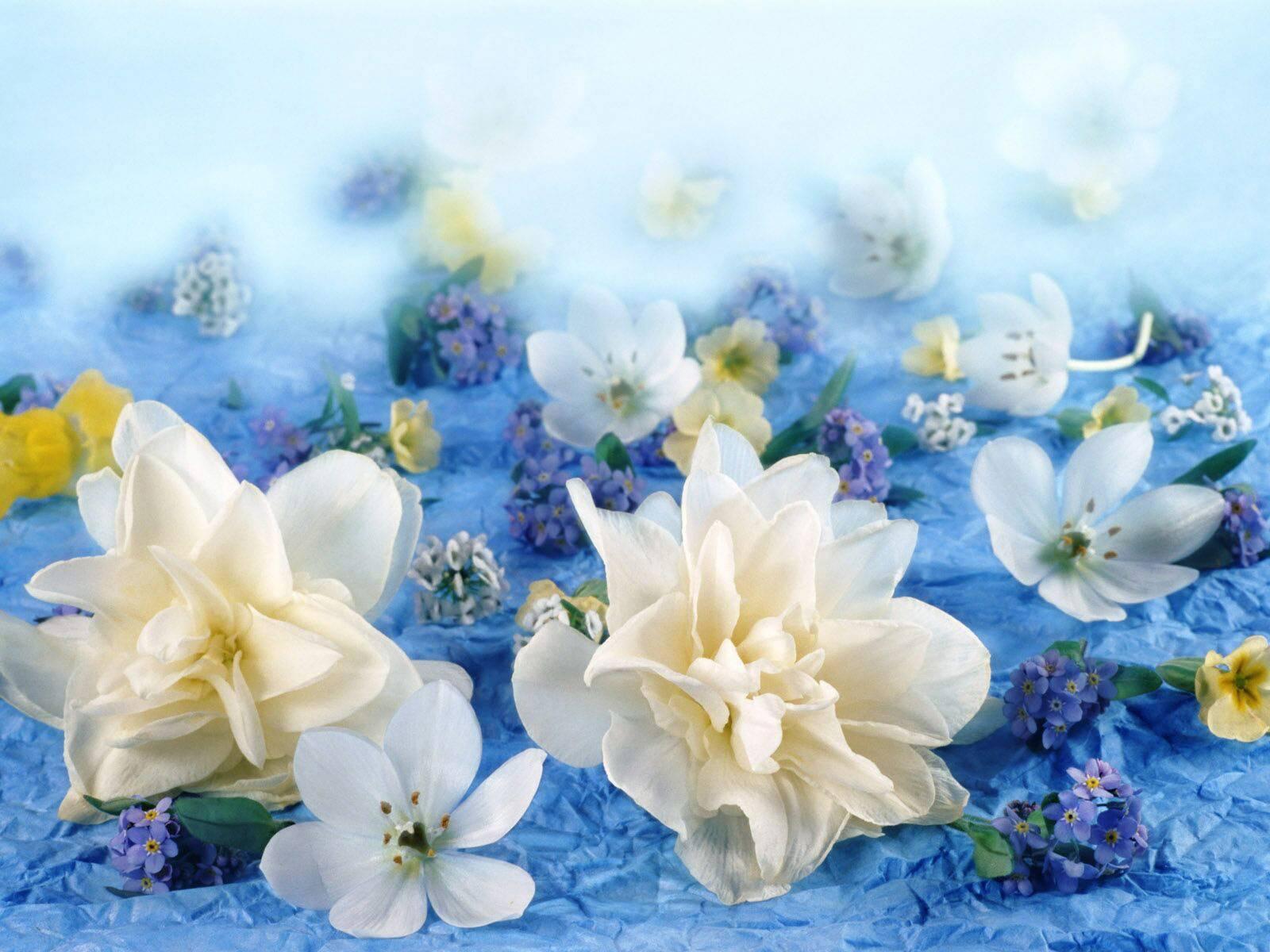 картинки цветы для открытки