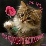 Наши любимые животные. Кошки