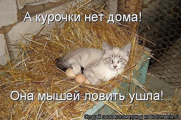 Наши любимые животные. Кошки.