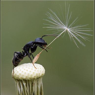 «Ой, укусил!» Действия при укусах насекомых